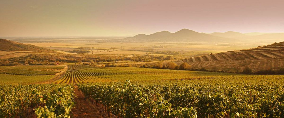 The tokaj region and Slovak wine Top 10 things to do in Slovakia