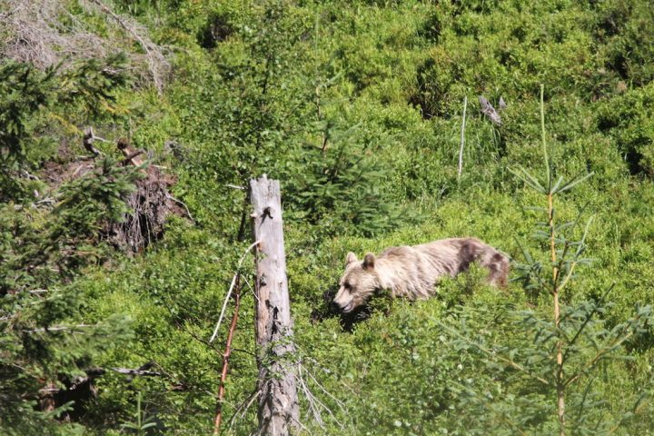 NEW BEARWATCHING WILDLIFE TOUR SLOVAKIA WITH ADVENTOURA 3